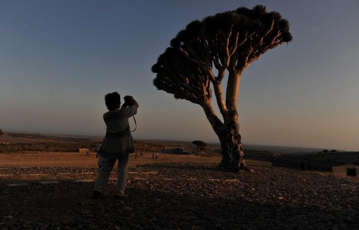 Сокотра © ТАСС/EPA/YAHYA ARHAB