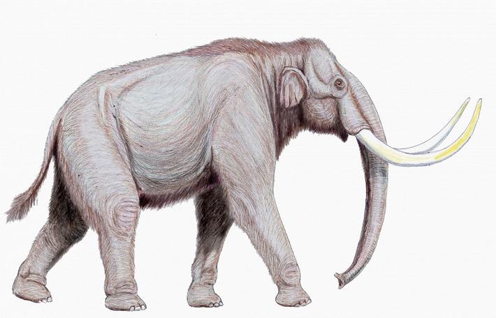Трогонтериевый слон (степной мамонт)© commons.wikimedia.org/Dmitry Bogdanov