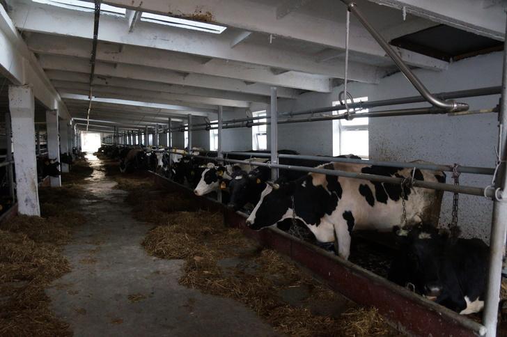 В Пестречинском районе Татарстана открылся животноводческий комплекс после капремонта