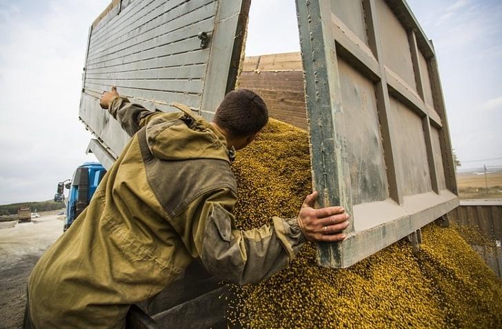 Почти 100 тысяч тонн кукурузы экспортировали из Приморья в АТР