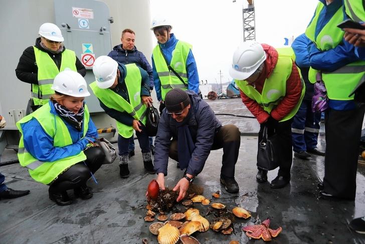 «Терминал Астафьева» реализует программу выращивания моллюсков в акватории терминала. Фото: «Терминал Астафьева»