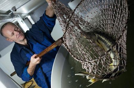 В Дубне начинают строительство крупнейшего в Подмосковье рыбоводного комплекса