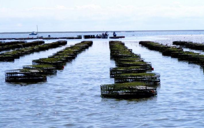 В особо охраняемых зонах Чёрного моря начнут выращивать мидий