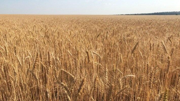 Россия продолжает делать ставку на сельское хозяйство