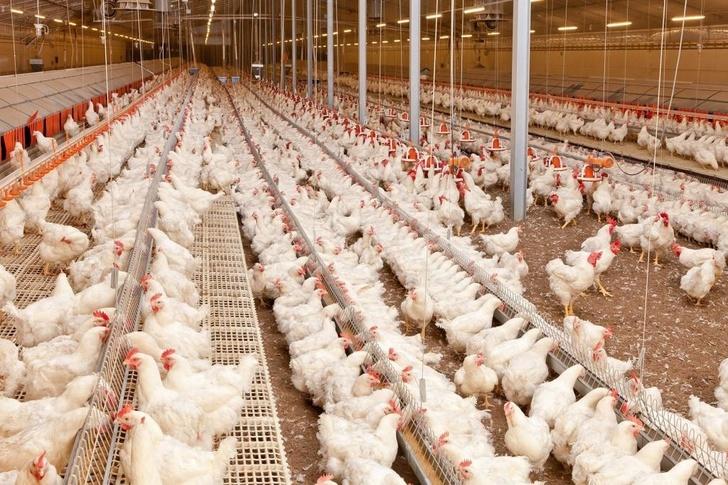 «Росэлектроника» разработала газосигнализаторы для животноводческих комплексов