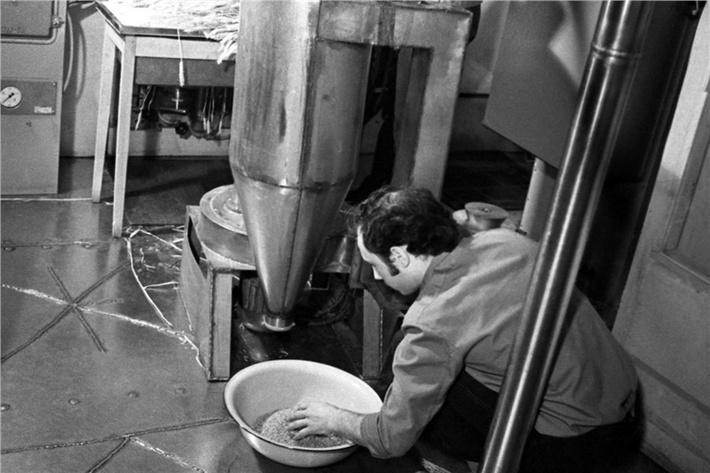 Получение муки из зерна, выращенного во время научного эксперимента на установке «БИОС-3»Помолом муки занимается Геннадий Асиньяров, фото 1973 года.