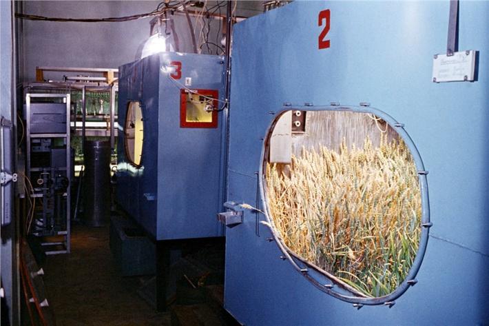Фитотронный зал: в бункере растет настоящая пшеница