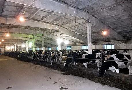 В Удмуртии открылись реконструированные доильный зал и животноводческий корпус на 350 коров