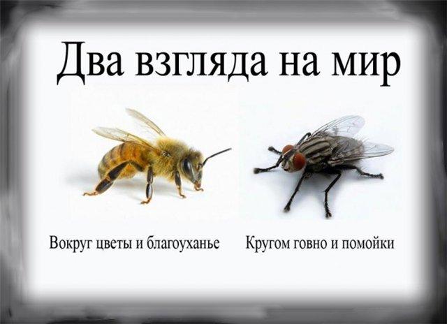 О нас написала РГ и рассказали на Эхе Москвы» в блоге «Новости ...