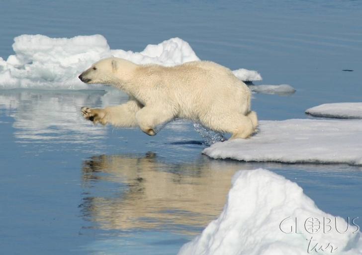 Картинки по запросу Арктика фото