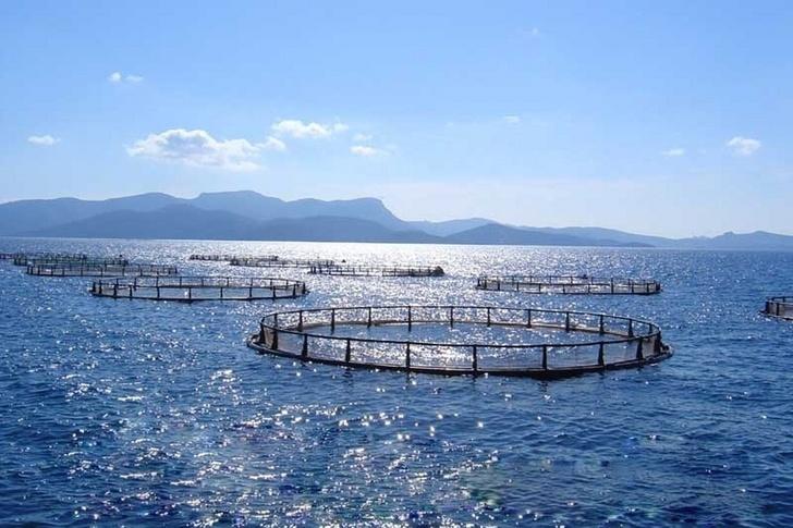 В Крыму за 1 квартал 2018 года производство товарной аквакультуры выросло в 3,5 раза
