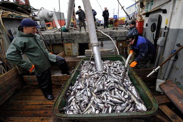 Экспорт рыбы и морепродуктов в 2018 году вырос на 4% – до 2,2 млн тонн, импорт снизился на 0,5% – до 596 тыс. тонн