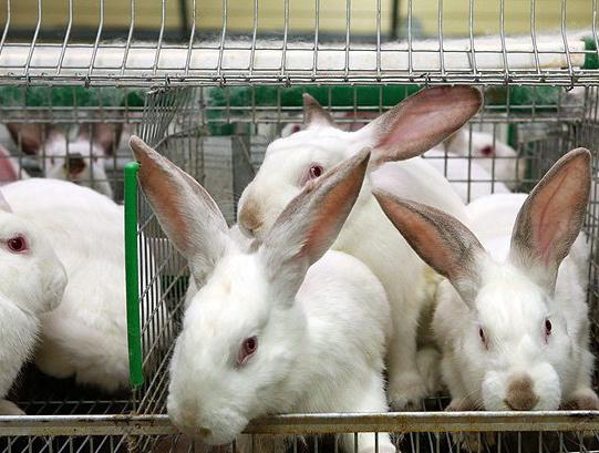 В Омской области ввели в эксплуатацию кролиководческую ферму