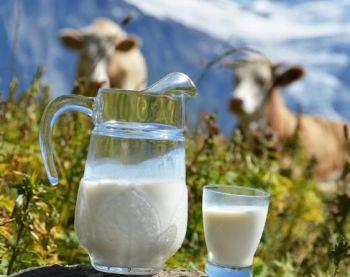 Подмосковное крестьянское хозяйство открыло молочную ферму к своему 25-летию