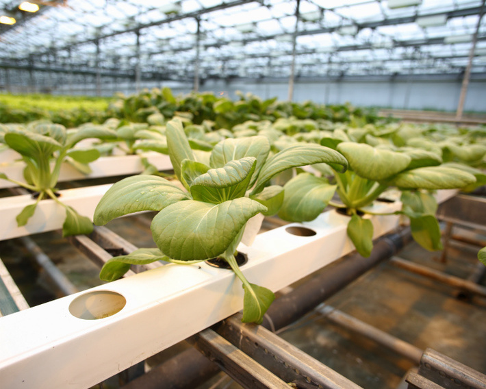 «Долина солнца» планирует выпускать до2,3 тысяч тонн продукции вгод