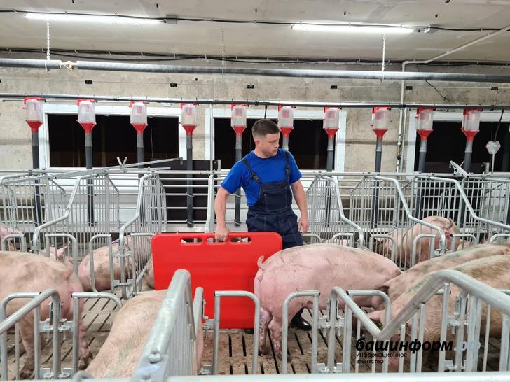 В Башкирии заработал новый свинокомплекс