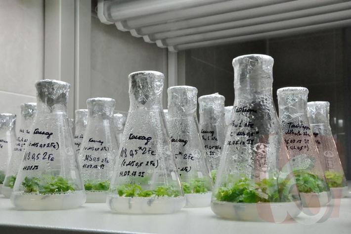 -Уникальная лаборатория по клональному размножению растений открыта в Белгороде-