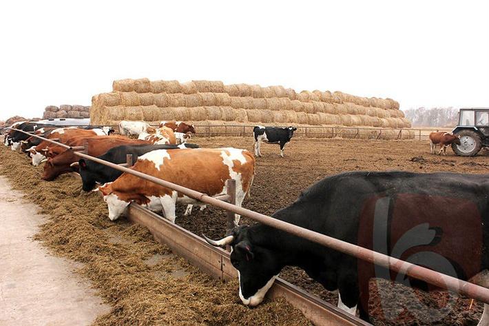 Выращивание бычков рентабельность 69