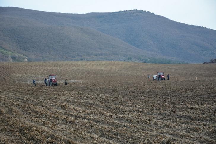 В Севастополе агрофирма «Золотая Балка» закладывает новые виноградники
