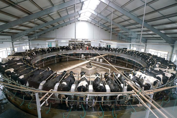 «Эконива» вошла в десятку крупнейших молочных компаний мира