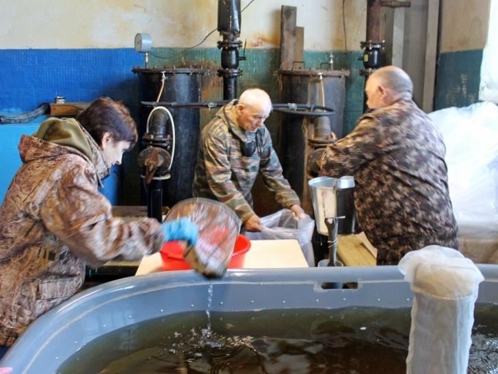 Работники рыбозавода производят погрузку личинок