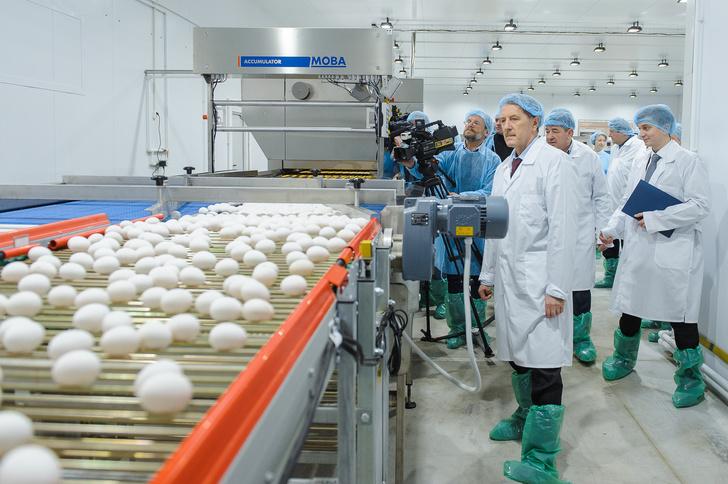 Открытие новой современной птицефабрики в Борисоглебске Воронежской области – событие для области