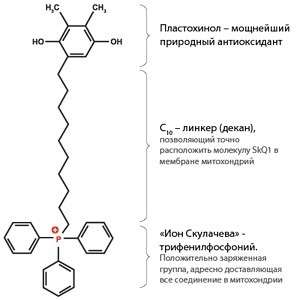 Антиоксидант_SkQ1