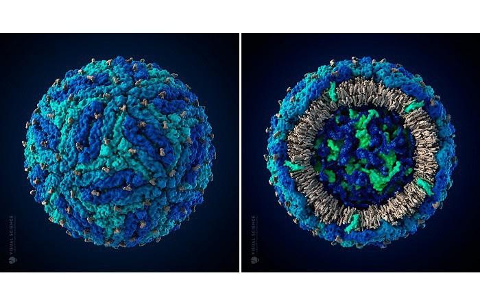Трехмерная модель вируса Зика в атомном разрешении © Visual Science
