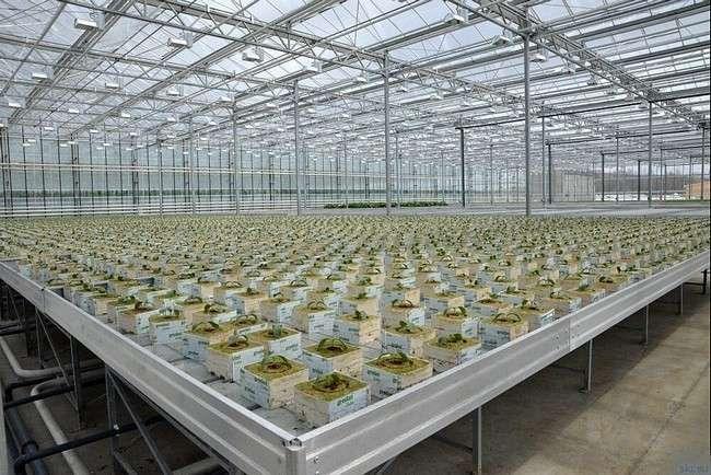 В Сахалинской области введена в эксплуатацию первая очередь нового комплекса ОАО «Совхоз «Тепличный»