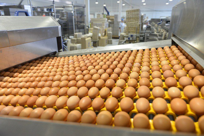 На птицефабрике «Вараксино» (Удмуртия) открыт новый производственно-логистический комплекс