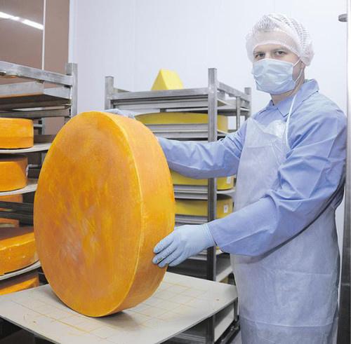 Тульский молочный комбинат начал выпуск сыров