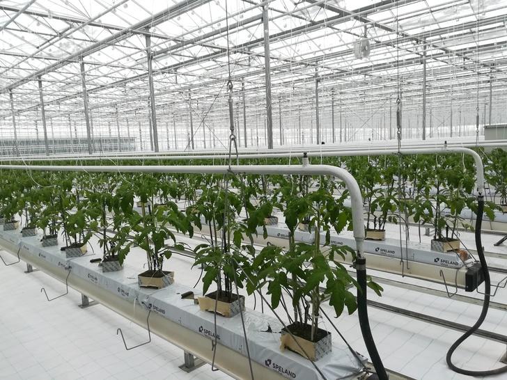 Тамбовский тепличный комплекс запустил первую очередь теплиц пятого поколения