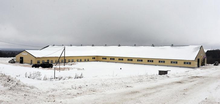 Новая молочная ферма на 400 голов открылась в Удмуртии