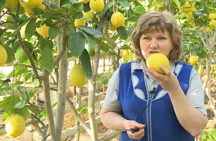 Фото: предоставлено магнитогорским лимонарием компании «Сады России»