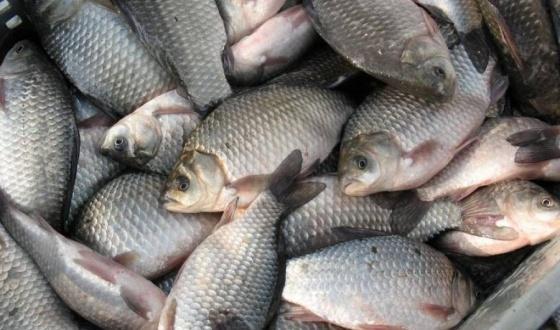 В 2015 году в Волгоградской области выловили более 5 тысяч тонн рыбы