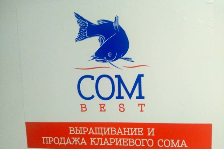 Предприятие по выращиванию африканского клариевого сома открыли в Ярославле