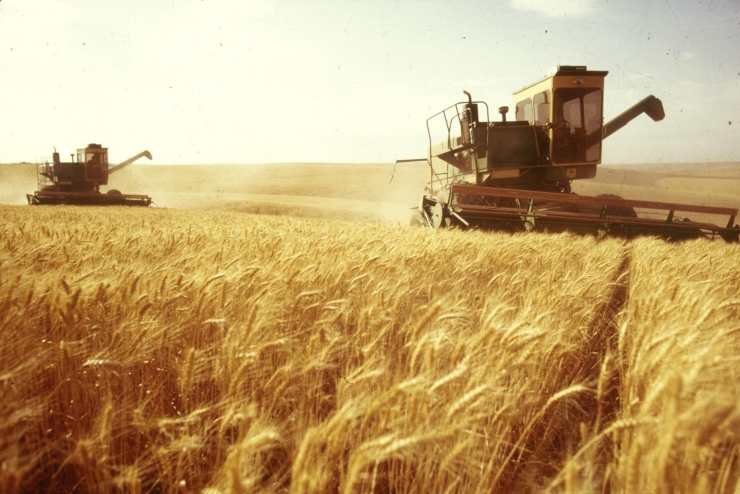 Картинки по запросу сбор зерна в россии