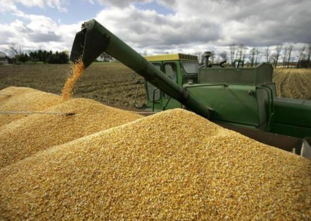 Россия: Закупочные зерновые интервенции начнутся уже в сентябре