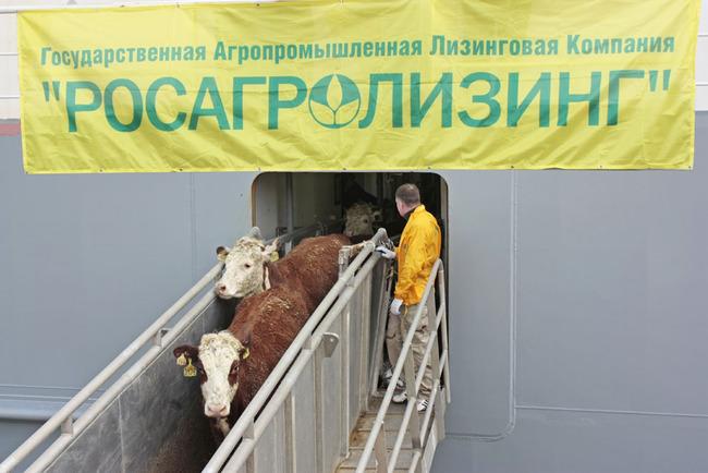 Разгрузка скота в мтп. Ванино для хозяйств Дальнего Востока