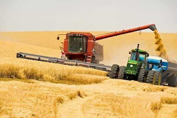 В Украине приступили к сбору ранних зерновых