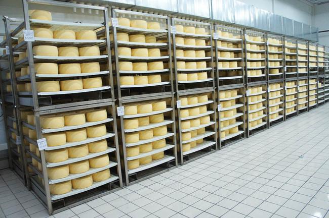 поставщики сыров москва: