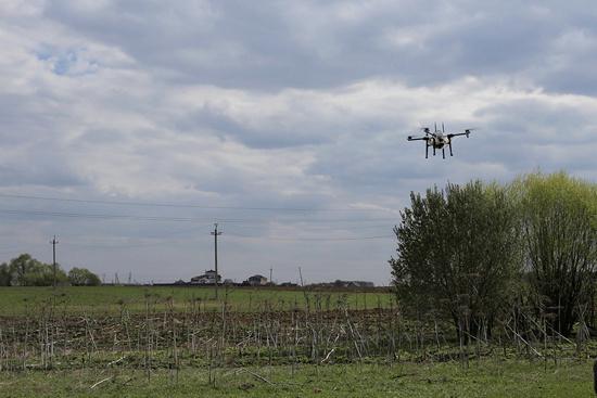 поле дрон квадрокоптер борщевик Сосновского