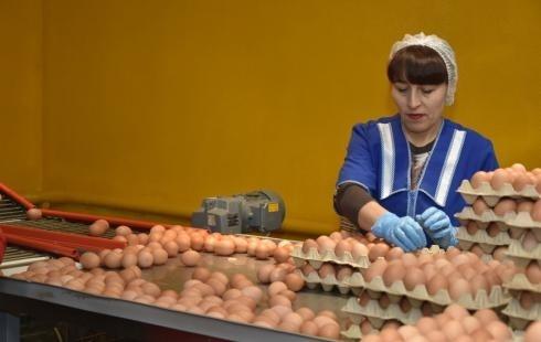 Новый цех открылся на Ниженевартовской птицефабрике в Тюменской области