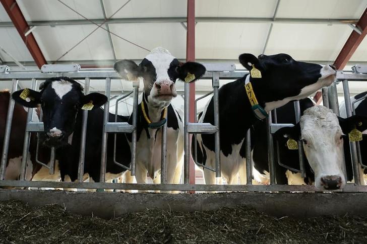 Новый молочный комплекс открылся в Ульяновской области