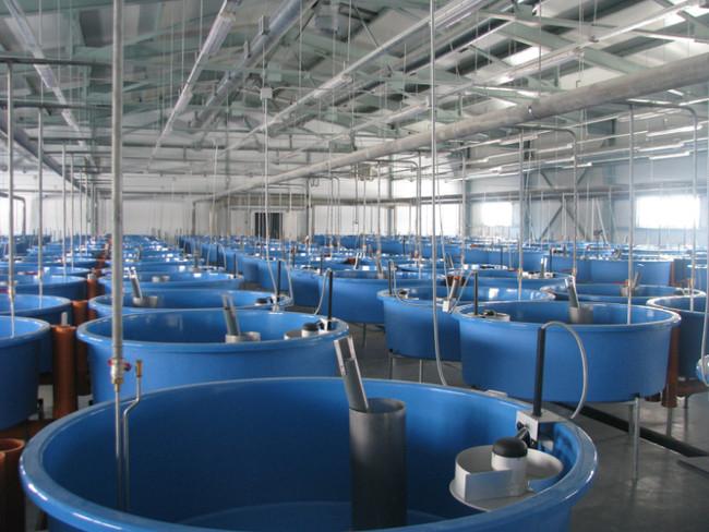 На Ямале планируют построить 5 рыборазводных заводов