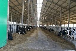 Вторая очередь крупного молочного комплекса введена в эксплуатацию в Тюменской области