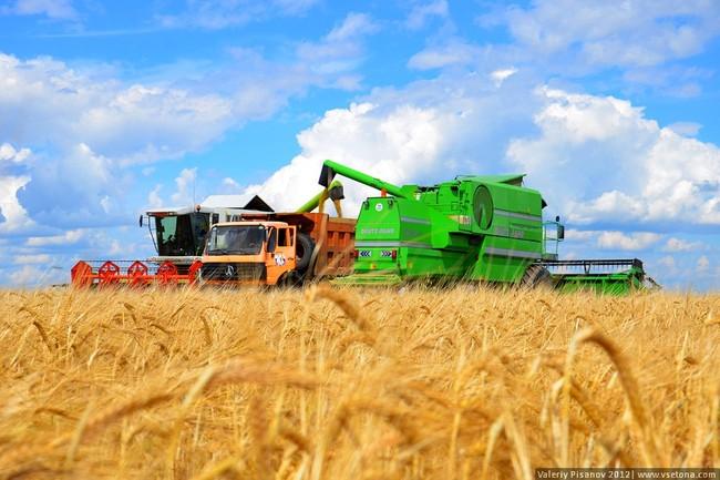 В Алтайском крае завершается уборка зерновых