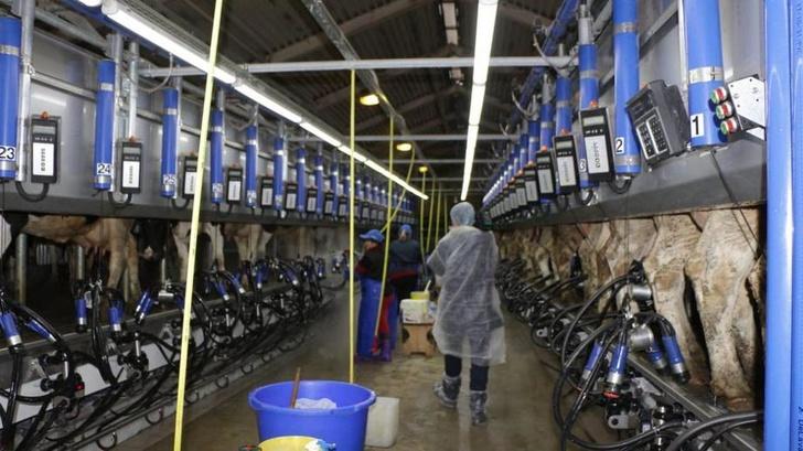 В Подмосковье открыли модернизированную молочную ферму на базе госплемзавода «Пойма»