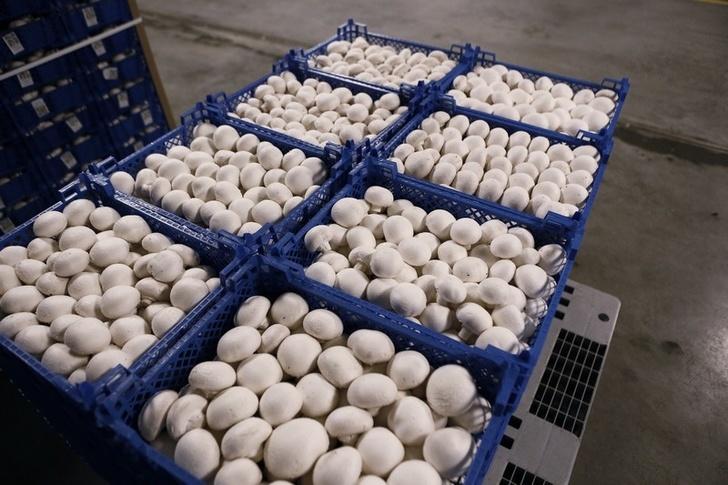 Выращивание грибов в краснодарском крае в 53