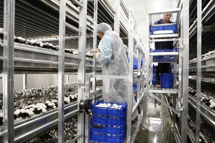 Предприятия по выращиванию грибов в 913